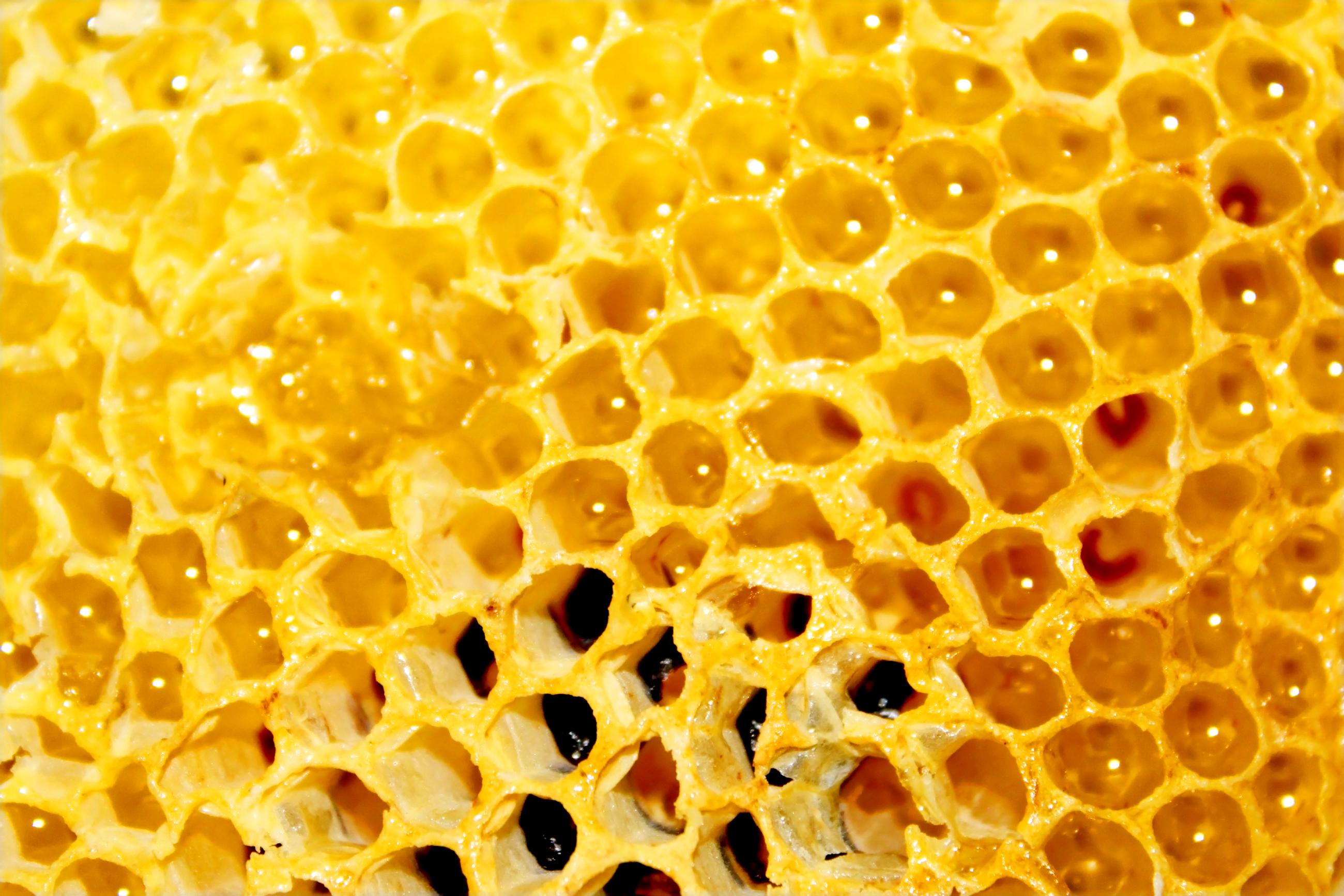 stockvault-honey-comb127835